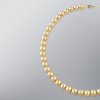 Pearl Necklace with Treated Golden Japanese Akoya 8.5-8.0 mm Pearls