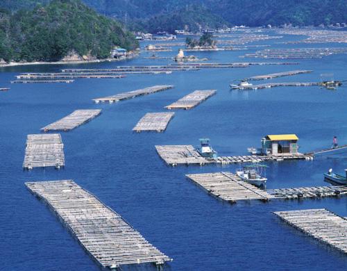 Una granja de perlas en Japón